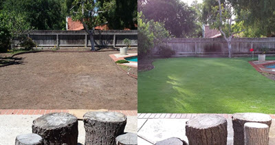 Before and After Grass
